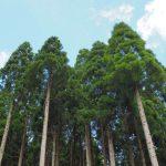 木とあそび、森をまなぶ3日間 GW 5/3〜5@アークヒルズ