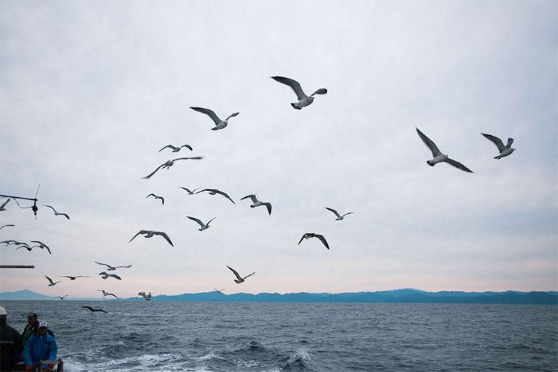 粟島浦村|新潟県の漁師