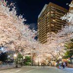 21世紀の「桜名所」で楽しむ春の風情