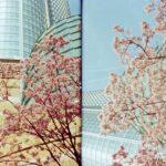PHOTO STORY|写真家 奥山由之、六本木ヒルズの「さくら」を撮る